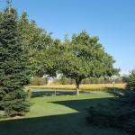 Il giardino dell'agriturimo